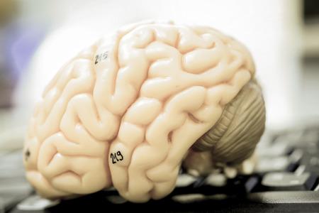 cerebro: modelo de cerebro humano con el estilo de color de edad Foto de archivo
