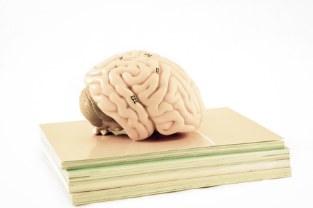 cerebra: human brain anatomy with old color style Stock Photo