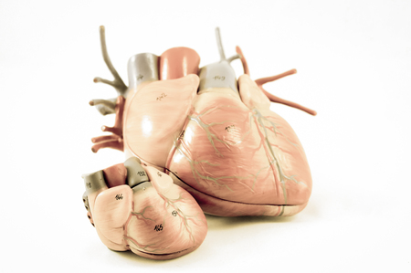 ventricle: human heart with vintage style with old color style Stock Photo