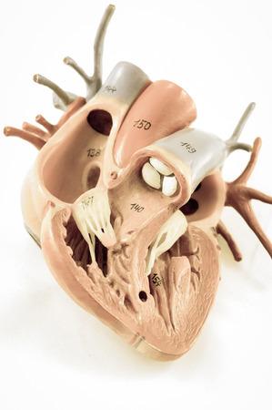 corazon humano: coraz�n humano con estilo vintage con estilo de color de edad