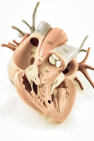 human heart: human heart with vintage style with old color style Stock Photo