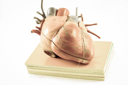 with aorta: human heart with vintage style with old color style Stock Photo