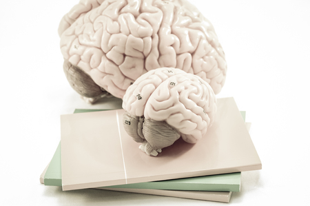oblongata: selective focus about human brain model with old color style