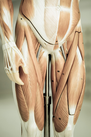 body parts: muscle of human  body parts with old style
