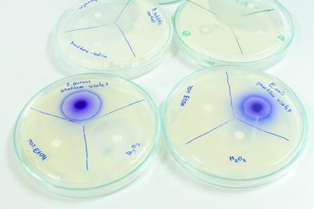 microbiologia: microbiology laboratory test Foto de archivo