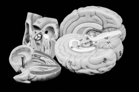 brain and heart with black and white color concept
