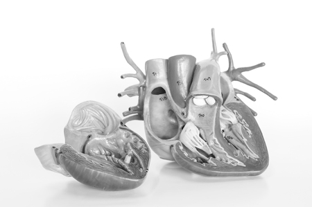 heart human model with black and white color Stock Photo
