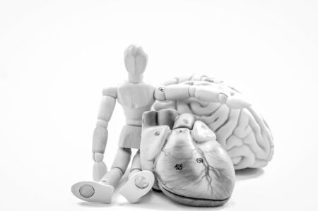 brain and heart of human anatomy model with black and white color