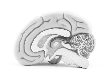 ?human brain with black and white color