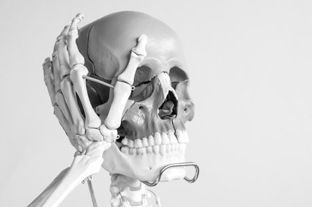 skull anatomy model with black and white color