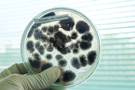 Schimmels kolonie in petridish