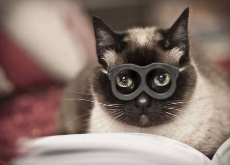 Cat reading photo