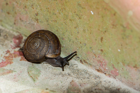 snail is slow animal
