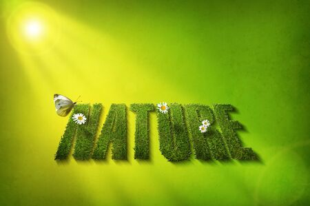 nature grass font with daisies and butterfly photo