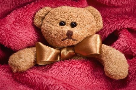 plush teddy bear with golden bow lying under blanket photo