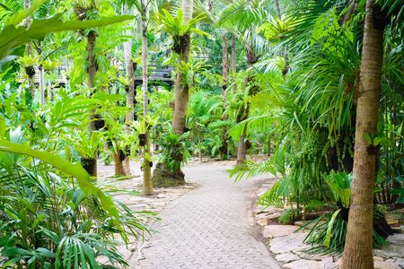 walking trail: Walking trail in lush green tropical forest.