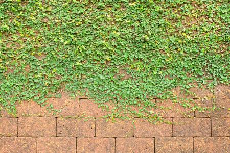 lantana camara: background and texture of vintage style decorative brown brick wall with Lantana camara.