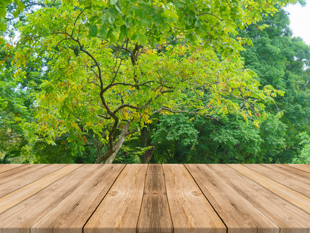 Wooden board empty table in front of forest background. Perspective brown wood over trees in forest - can be used for display or montage your products. spring season. vintage filtered image.