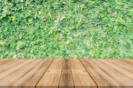 forest products: Wooden board empty table in front of tree background. Perspective brown wood over trees in forest - can be used for display or montage your products. spring season. vintage filtered image.