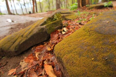 magical forest: Covered with moss rocks and tree at fairytale-like magical forest.