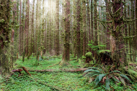 A view into Hoh rainforest in Olympic National Park