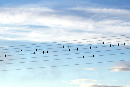 terezin: birds on wires look like notes