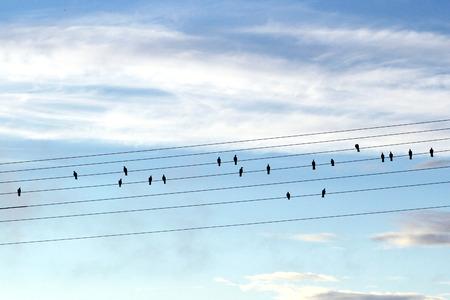 terezin: Gli uccelli sui cavi sembrano note