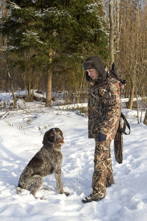 drathaar: hunting in the winter. man in camouflage and hunting dog drathaar pointer.