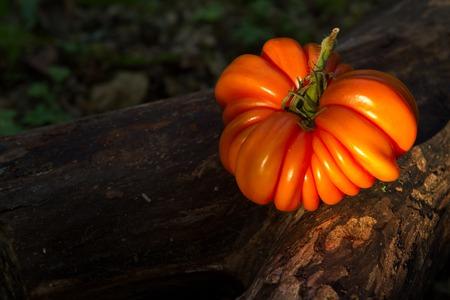 heirloom tomato beefsteak-type