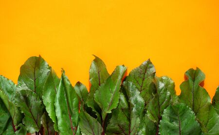 fresh beet leaves on a yellow background side view, culinary background 스톡 콘텐츠