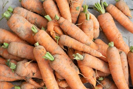 Photo food vegetable carrot. Texture background of fresh large orange carrots. Vegetable Root Carrot. 스톡 콘텐츠