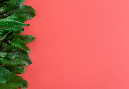 fresh beet leaves on a red background side view, culinary background.