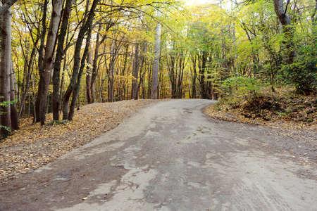 winding road in an autumn landscape between trees. toned. soft focus Foto de archivo