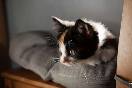 small kitten lies on a pillow on a chair and bask in the sun. Foto de archivo