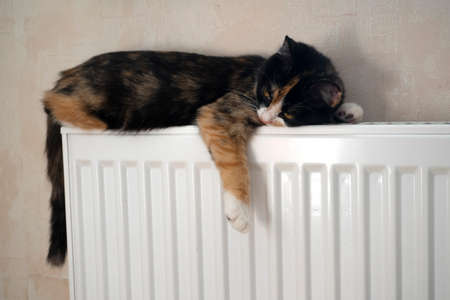 Tabby cat lying on top of a radiator looking up