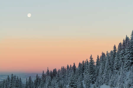 icy: full moon over icy forest