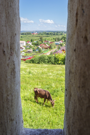 View through the loophole on a cow that grazes in a meadow in Pereslavl-Zalessky