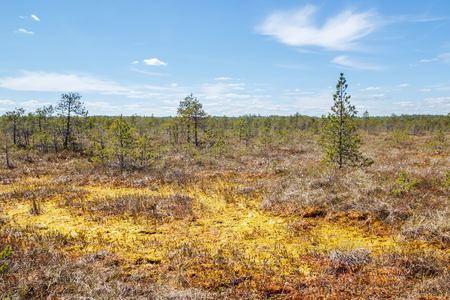 edges: Mounted bog in central Russia
