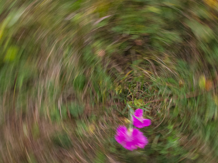 Dizziness, abstraction with pink flowers and glass 版權商用圖片