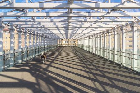 Dog in a pedestrian sunny tunnel