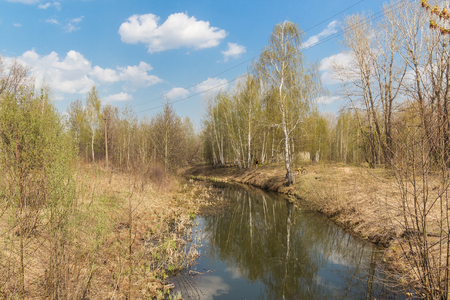 Little river among trees in spring sunny day Фото со стока