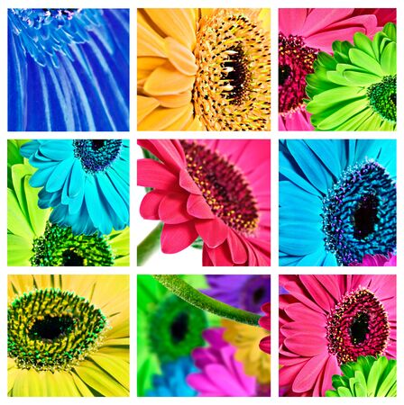 Collage of gerbera daisy close ups in different colors photo