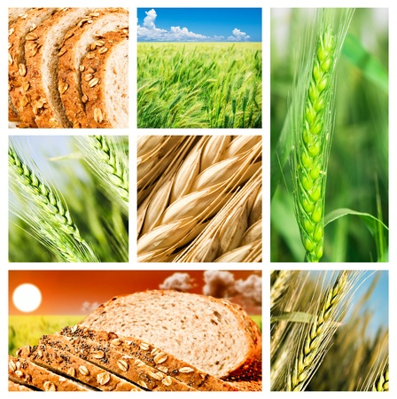 Collage of wheat and wheat products Stock Photo