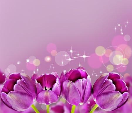 Dark pink tulips in background photo