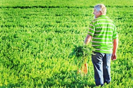 agricultor: Agricultores de zanahoria en un campo de zanahoria en una granja