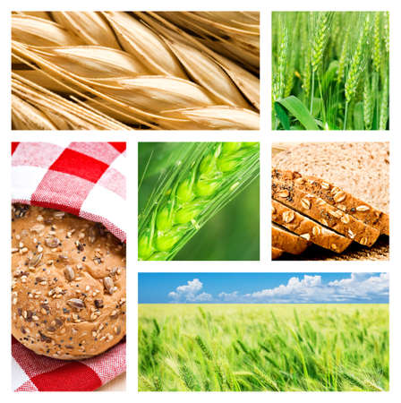 Collage of wheat and wheat products photo