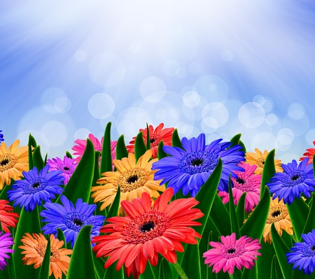 Colorful daisy gerbera flowers in a field - spring background photo