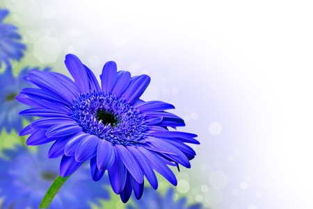 Close up abstract of  purple daisy gerbera flowers Stock Photo