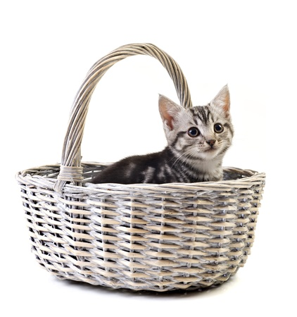 lovable: Adorable little kitten in basket on white background with space for text Stock Photo