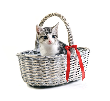 pampered pets: Adorable little kitten in basket on white background with space for text Stock Photo